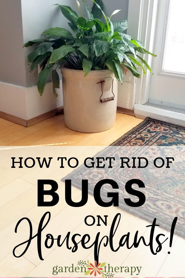 How to Identify, Treat and Get Rid of Houseplant Pests