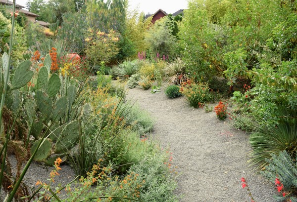 dry garden design for drought