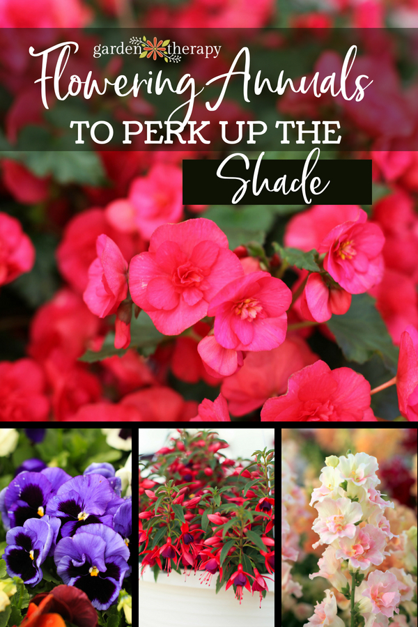 flowering annuals to perk up the shade garden