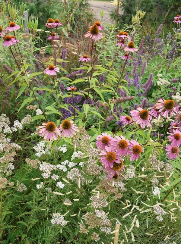 Perennial meadow garden design