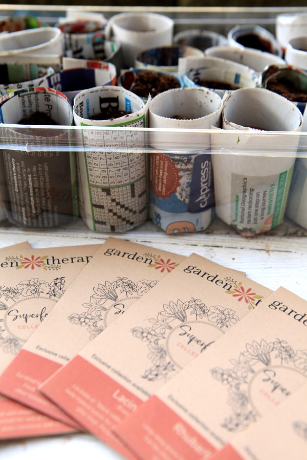 Paper pots for growing seedlings