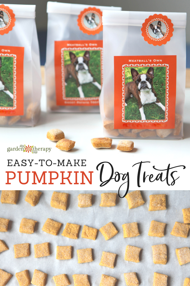 easy-to-make pumpkin dog treats