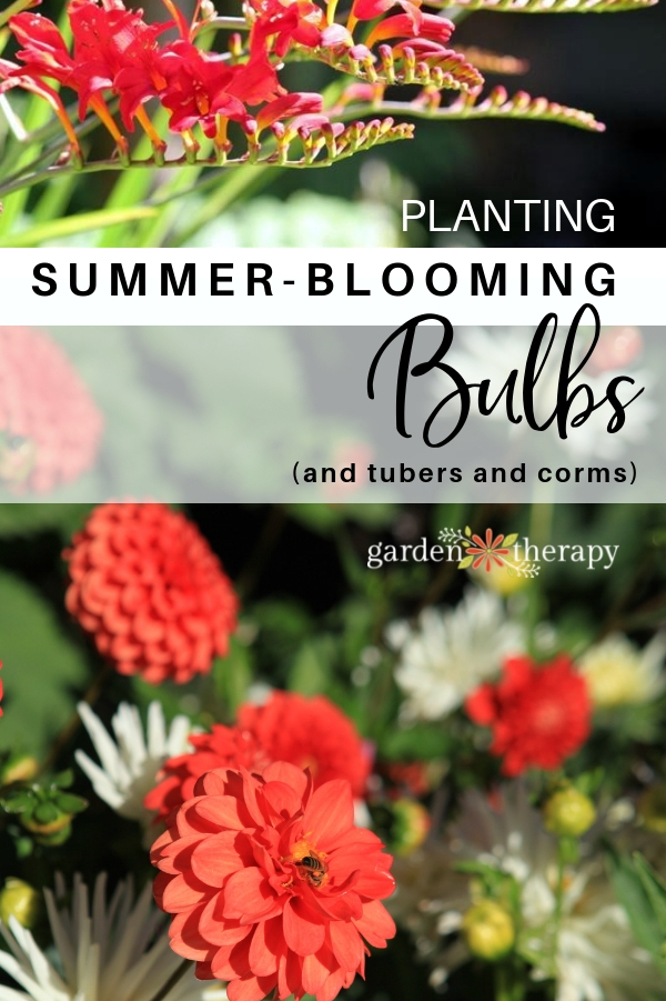 Summer Blooming Bulbs to plant in Spring