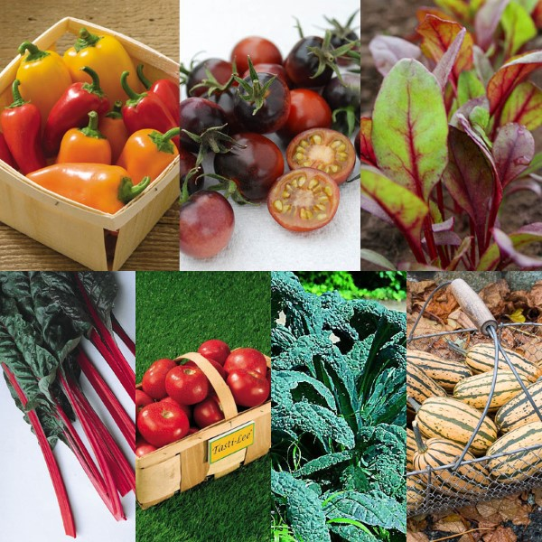 vegetables included in the superfoods garden kit