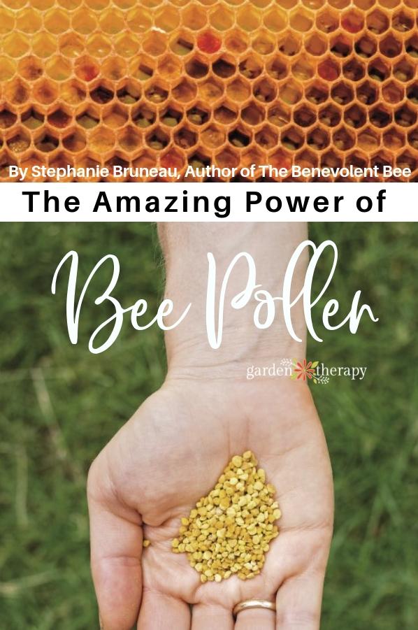 The Amazing Power of Bee Pollen