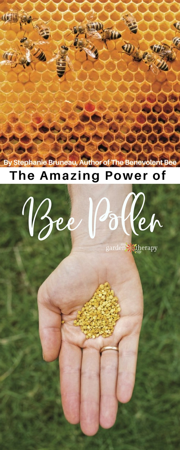 The Amazing Power of Bee Pollen