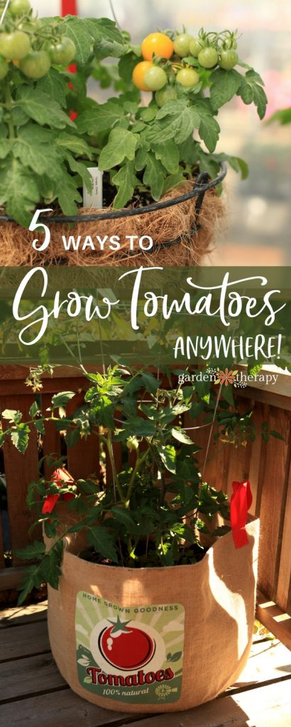 No Garden? No Problem! How to Grow Tomatoes Without a Garden