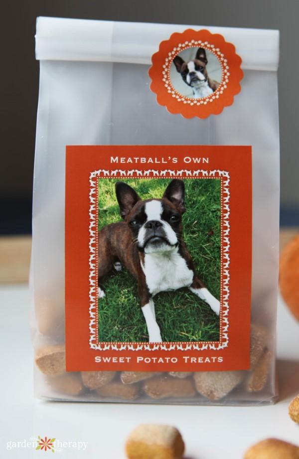 pumpkin dog treats to give