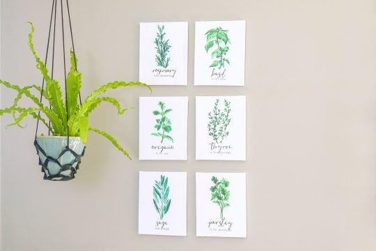 display herb prints on the wall near a hanging houseplant