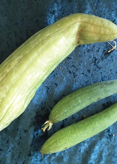 Luffa Gourds: Grow Your Own Shower Loofah