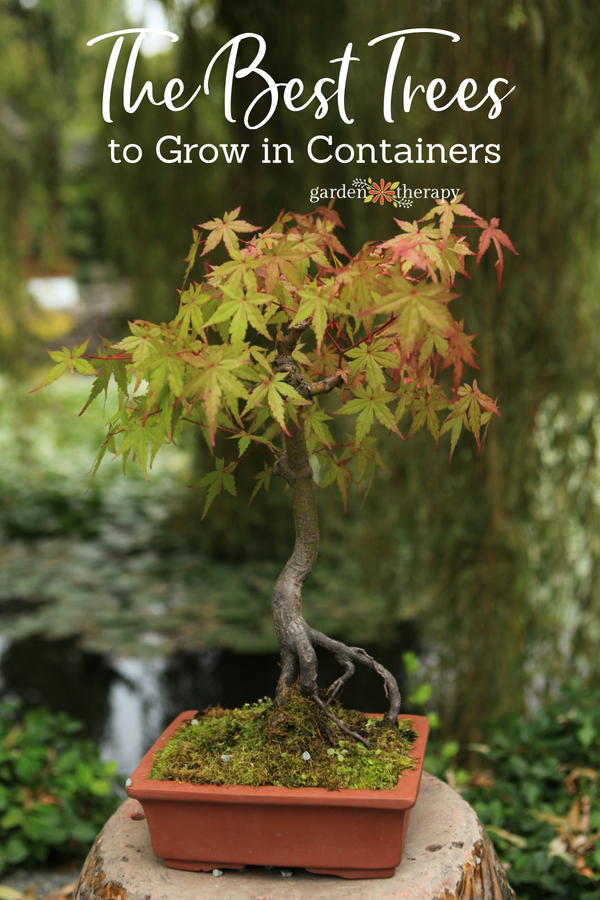 The best trees to grow in containers