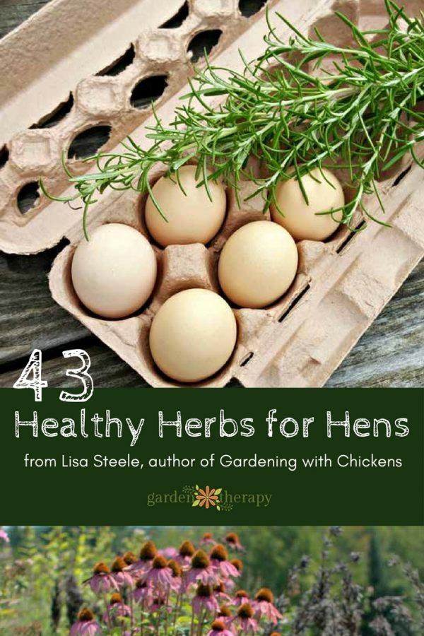 43 Healthy Herbs for Hens