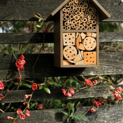 Attract Butterflies, Bees, and Hummingbirds with a Small-Space Patio Pollinator Garden