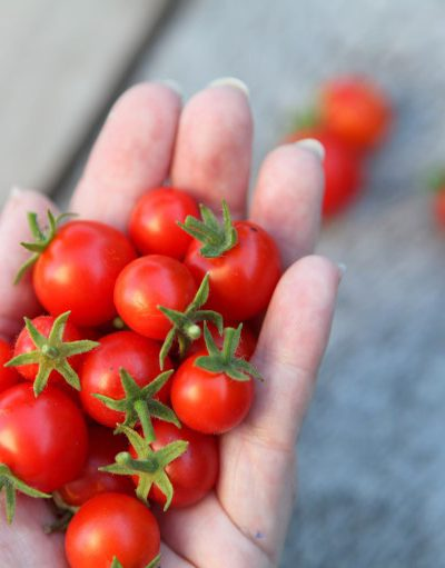 The 5 Best Small-Space Vegetables to Grow Mountains of Food