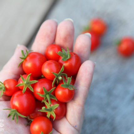 A handful of tiny tomatoes