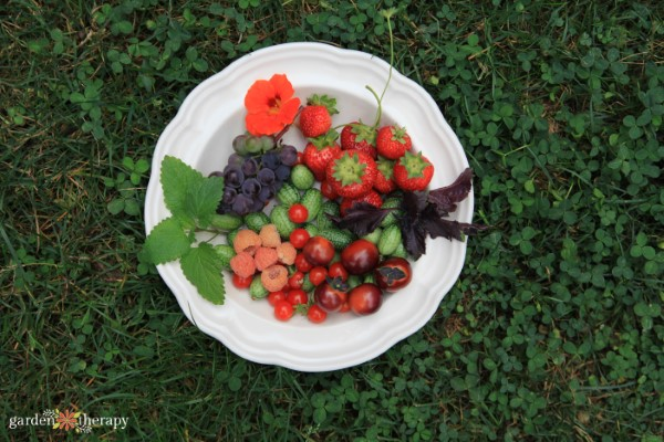 Garden Harvest of Berries, tomatoes, cucamelons and herbs