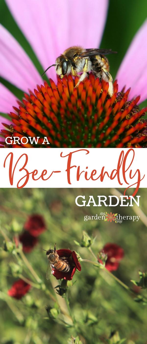 Grow a bee-friendly garden