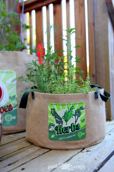 Growing herbs in a bag