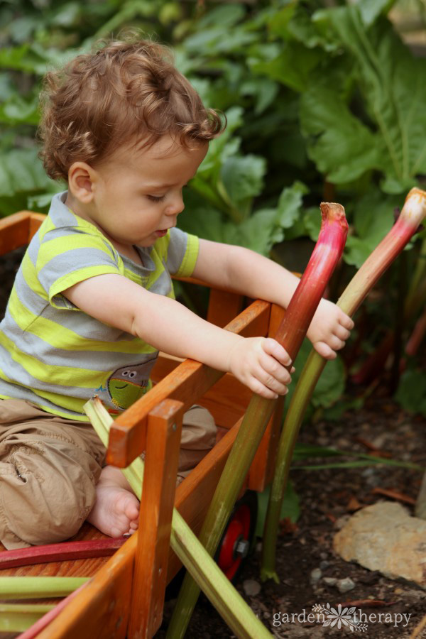 Toddler harvesting rhubarb in a children's vegetable garden