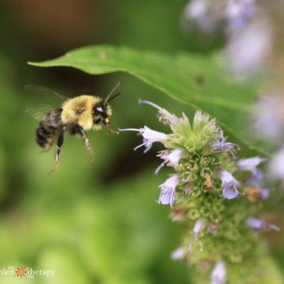 Backyard Wildlife Habitat: 30+ Projects and Ideas