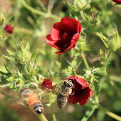 Plants and Tips to Create a Bee-Friendly Garden