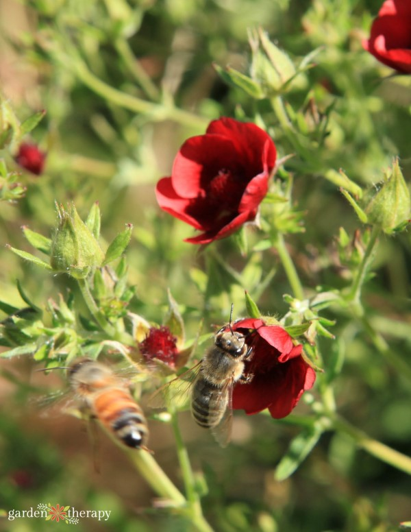 how to attract bees in the garden