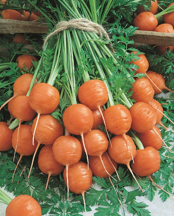 Round, ball-shaped Parisian carrots