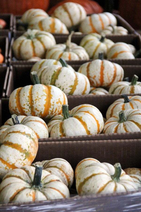 Small, striped Lil Pump-Ke-Mon pumpkins