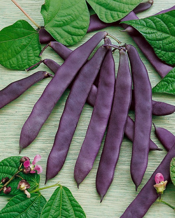 Purple Pod Bean