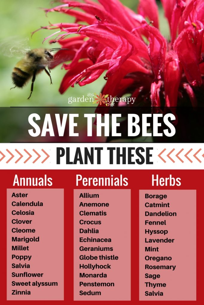 List of plants that bees like