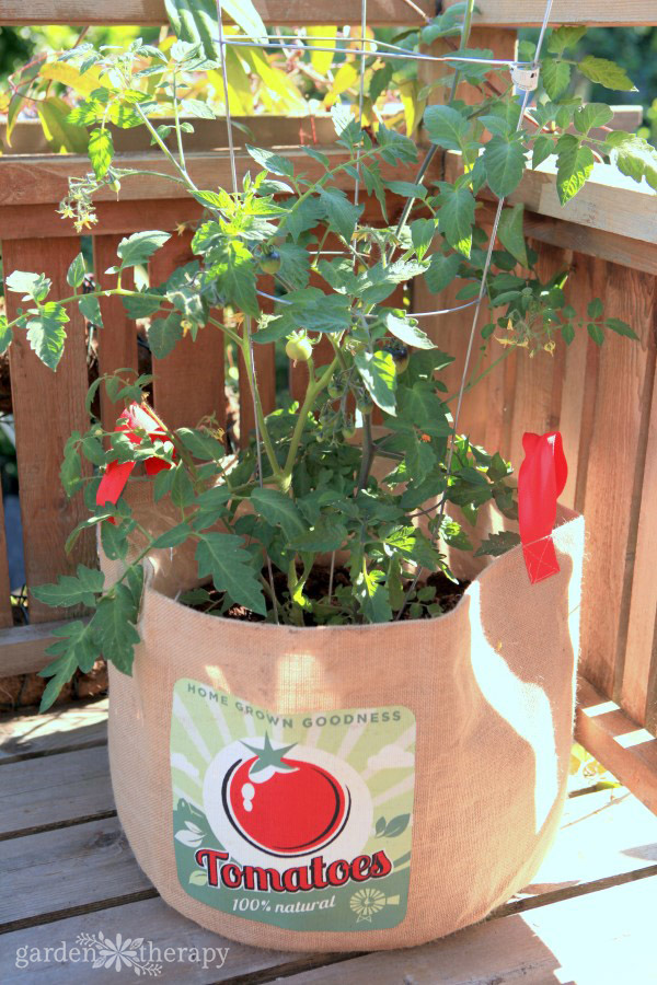 Tomato plant growing in a bag with image of tomato on it