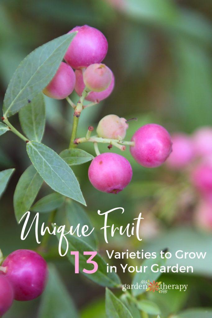 Unique Fruit Varieties to Grow in Your Garden