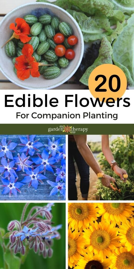 20 Edible Flowers for Companion Planting