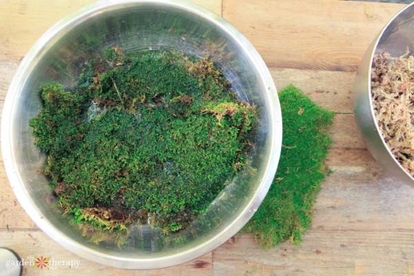 soaking moss