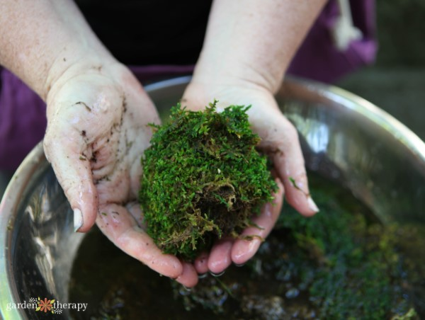 forming a ball with wet moss
