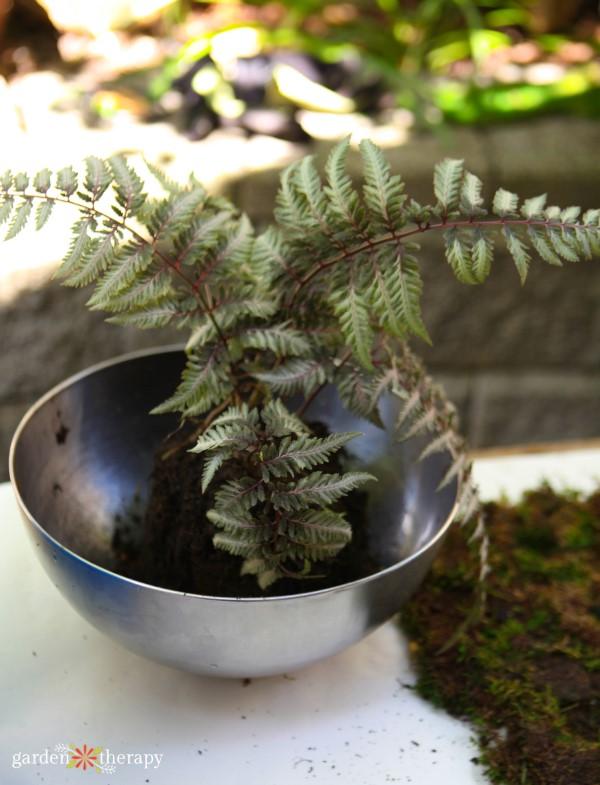fern for kokedama