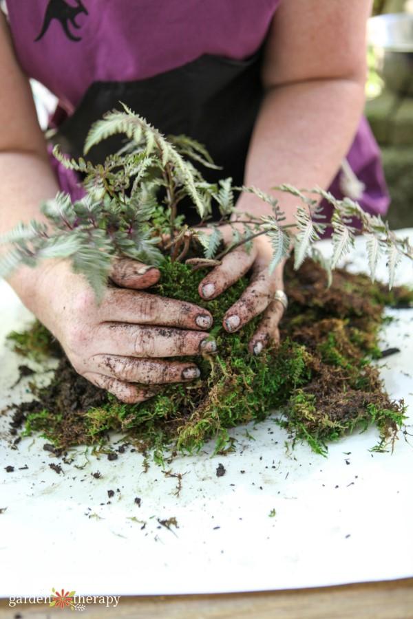 shaping moss around the root ball