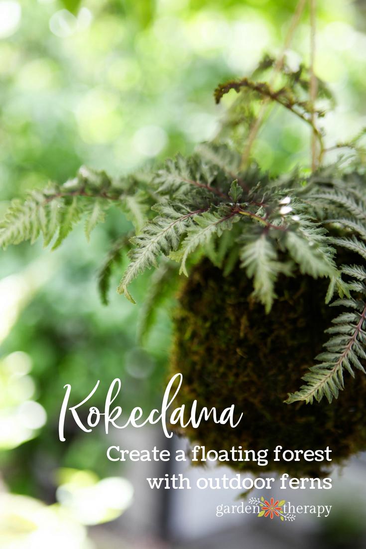 fern kokedama floating forest