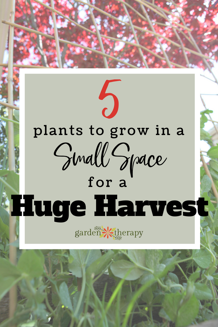 The 5 best small space vegetables to grow mountains of for Best flowers to grow in california