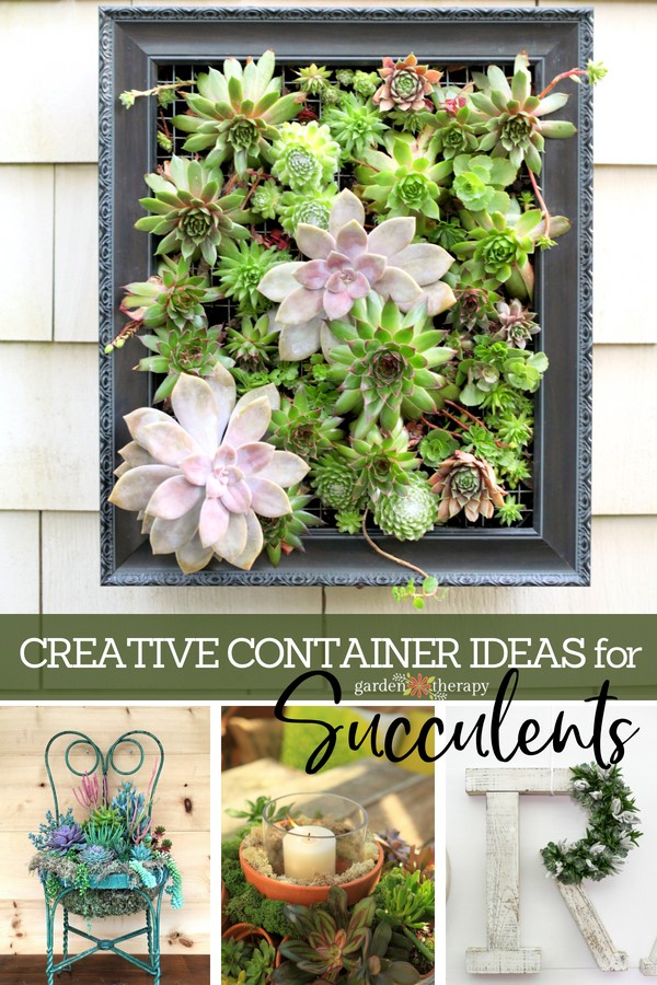 Creative Ideas for Sucuclents
