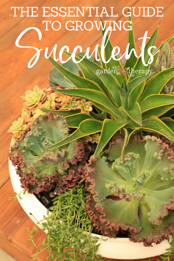the essential guide to growing succulents