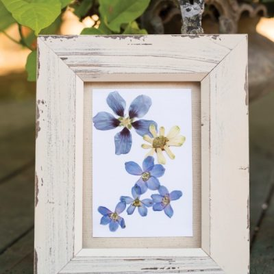 These Blooms Never Fade: How to Frame Pressed Flowers