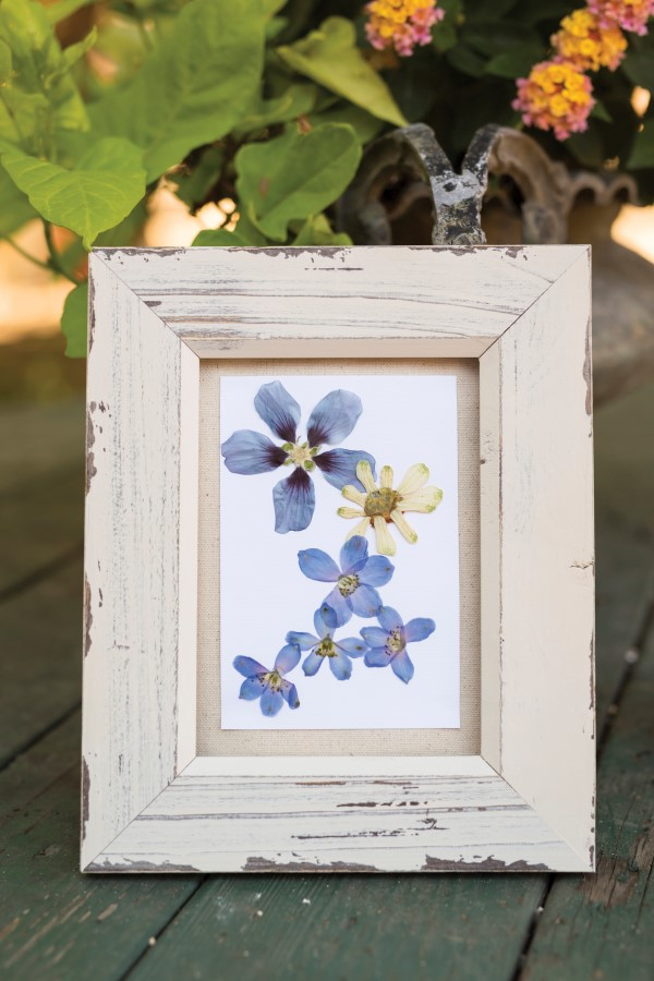 how to frame pressed flowers
