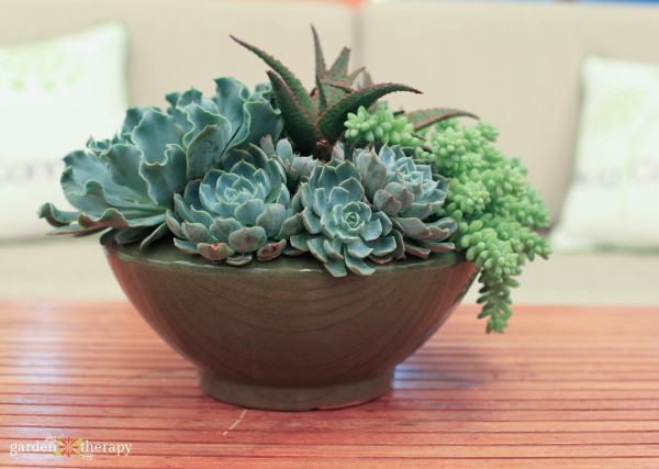 succulents planted in a bowl