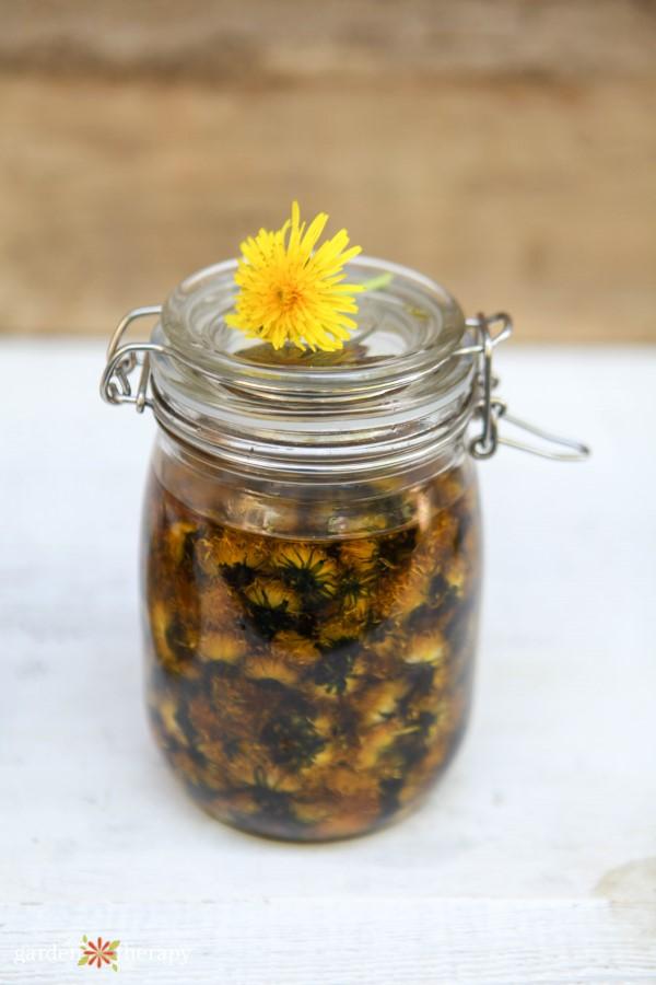 Dandelion infused oil for making lip scrub