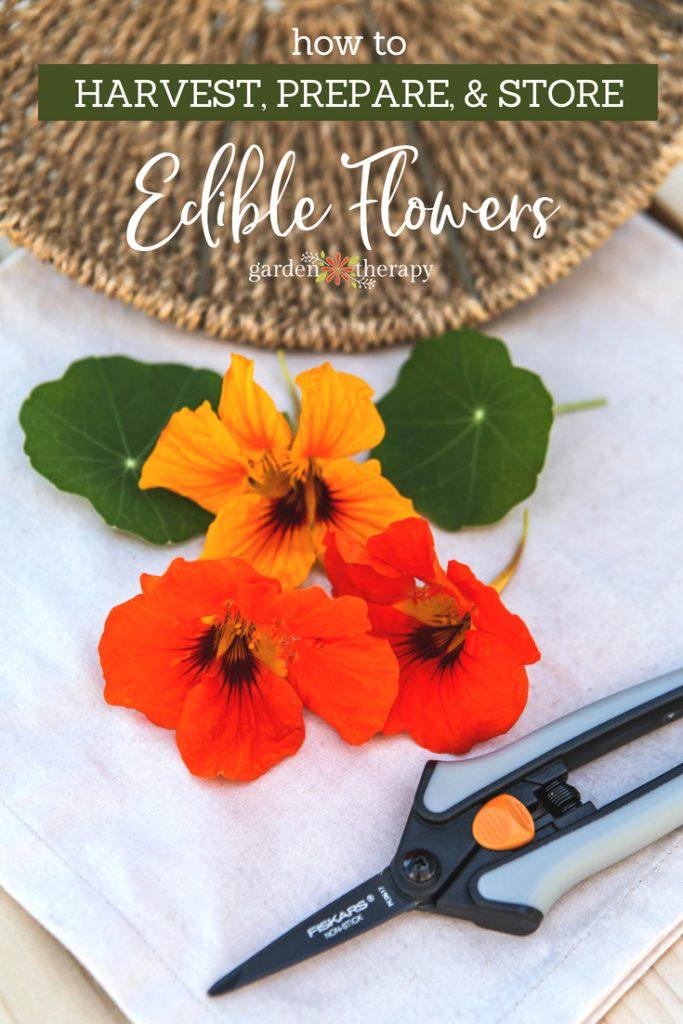 Harvesting, Preparing, and Storing Edible Flowers