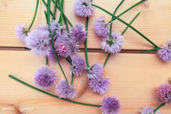 edible chive blossoms