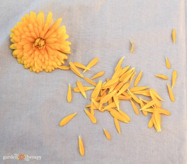 calendula petals are edible