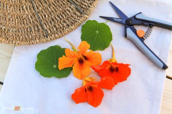 edible flowers harvested