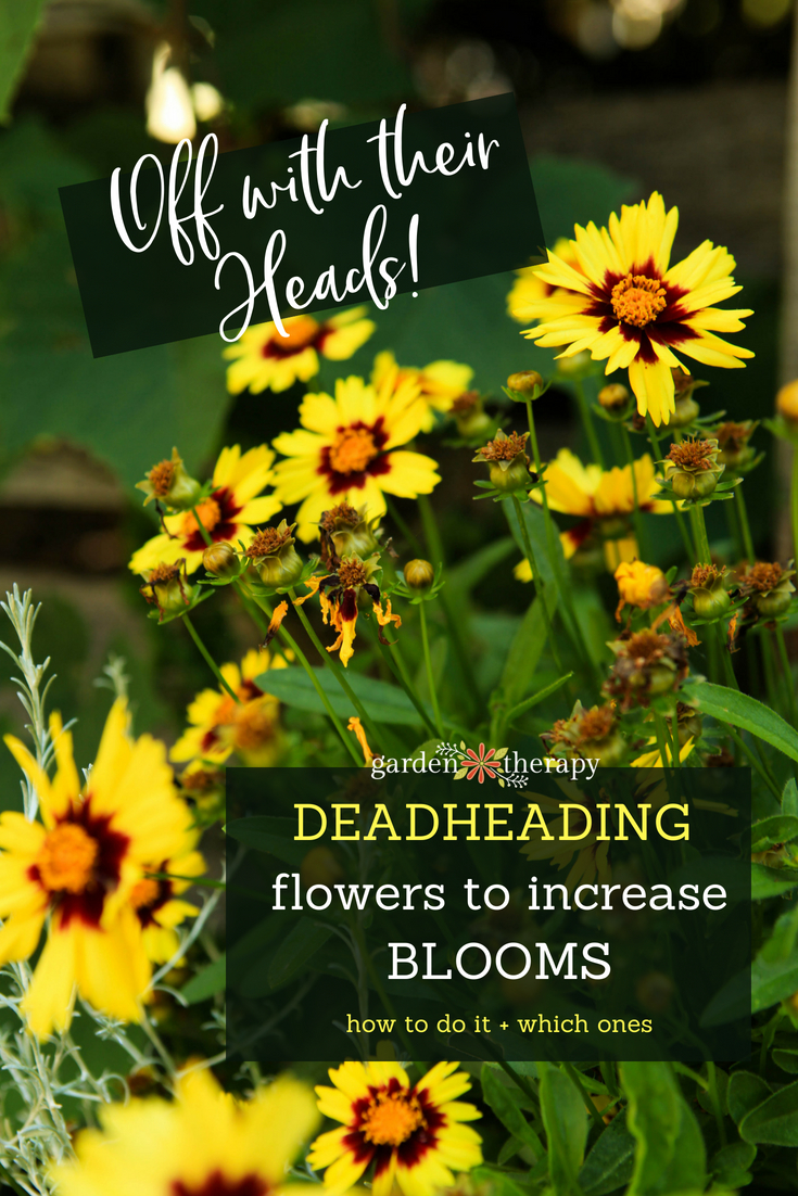 deadheading flowers to increase blooms